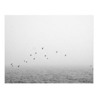 Birds in fog flyer
