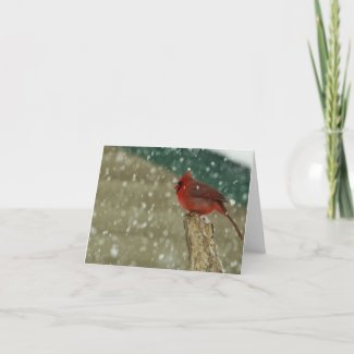 Birds in Snow Card
