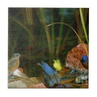 birds in stream tile