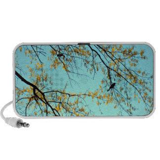Birds in tree. laptop speaker