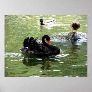 birds in water poster