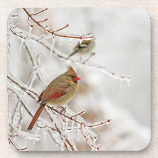 Birds in Winter Beverage Coaster