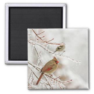 Birds in Winter Magnet