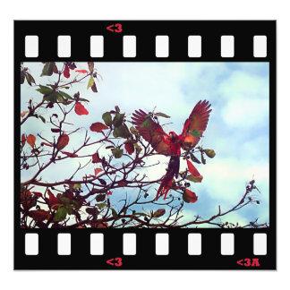 birds- macaw photo print
