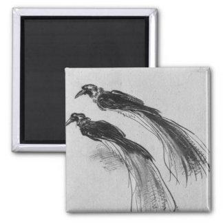 Birds Magnet