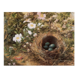 Birds Nest and Dogroses by Hill,Victorian Fine Art Post Card