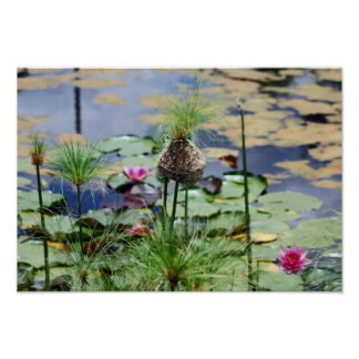 Birds nest at the lake with lilies poster
