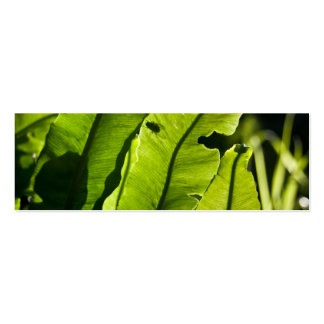 Bird's Nest Fern Double-Sided Mini Business Cards (Pack Of 20)