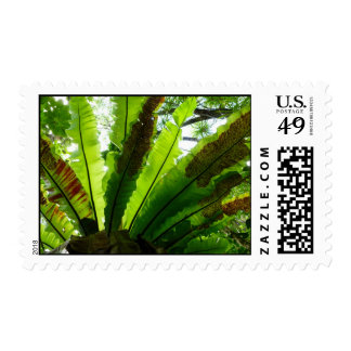 Bird's Nest Fern Postage