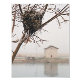 Bird's Nest Home Photo Print