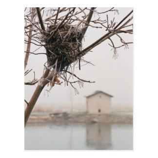 Bird's Nest Home Postcard