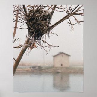 Bird's Nest Home Poster