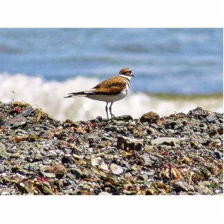 Birds Oceans Beaches Photo Sculptures