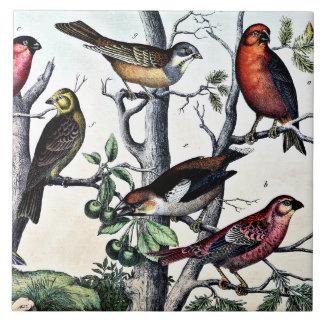 Birds of a Feather Azulejo Cuadrado Grande