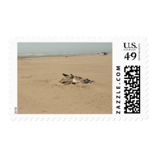 Birds of Different Feather Postage Stamp