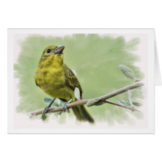 Birds of East Texas Note Cards