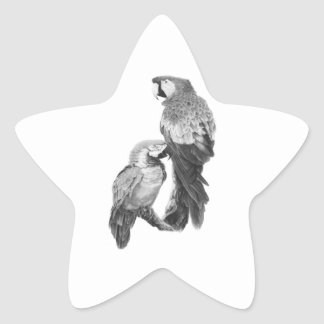BIRDS OF FEATHERS STAR STICKER