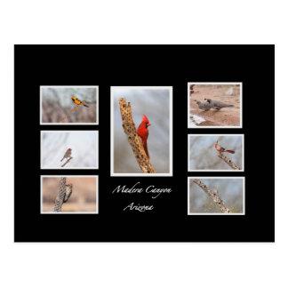 Birds of Madera Canyon Arizona Postcard