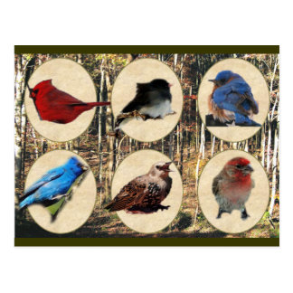 Birds of Middle Tennessee Postcard