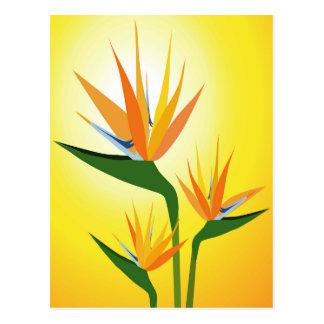 BIRDS OF PARADISE FLOWER DESIGN POSTCARD