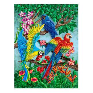 Birds of Paradise Postcard