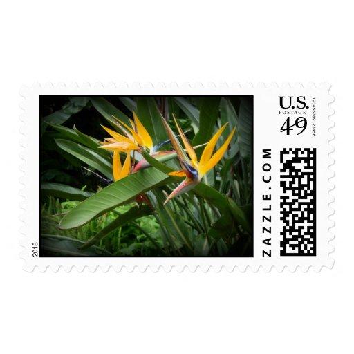 Birds of Paradise Stamp