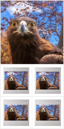 BIRDS OF PREY * AQUATIC &  EXOTIC BIRDS