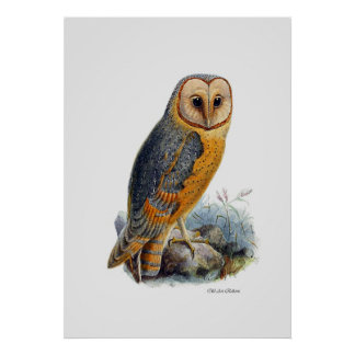 Birds Of Prey ~ Barn Owl Poster
