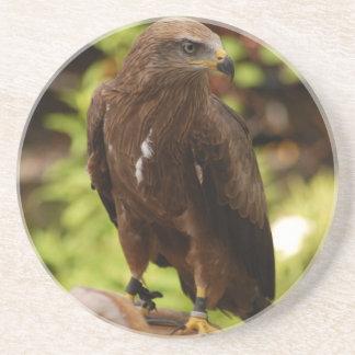 Birds of prey drink coaster