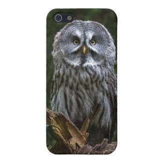 Birds of prey Great grey owl photograph phone case