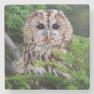 Birds of prey owl photograph coaster