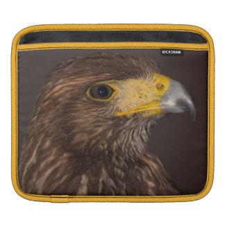 Birds of prey photograph hawk case