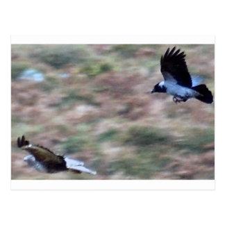 birds of prey postcard