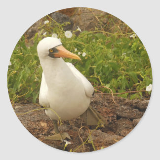 Birds of the Galapagos Islands>Cards and Stickers