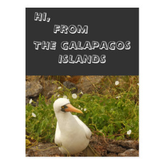 Birds of the Galapagos Islands>Cards and Stickers Postcard