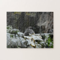 Birds of the Sea. Jigsaw Puzzle