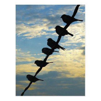 Birds on a Wire Postcard