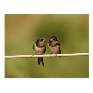 Birds on a wire postcard