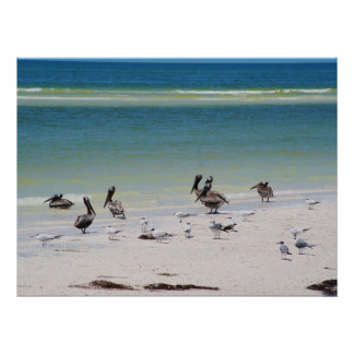 Birds on Anclote Key Poster