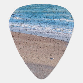 birds on beach crackle sea shore florida pick