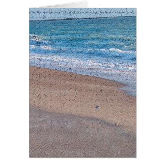 birds on beach crackle sea shore florida greeting card