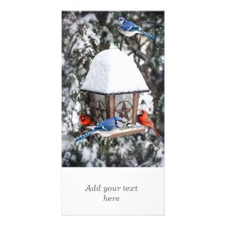 Birds on bird feeder in winter card