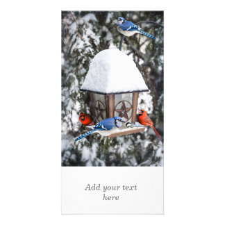 Birds on bird feeder in winter photo card template