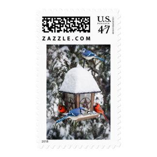 Birds on bird feeder in winter postage