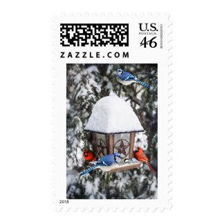 Birds on bird feeder in winter postage stamp