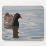 Birds on Bright Water: Adult Moorhen Mouse Pad