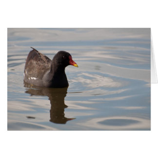 Birds on Bright Water Greeting Cards