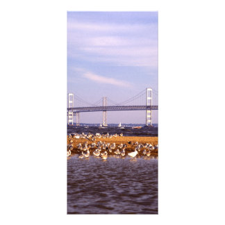 Birds on Chesapeake Bay Rack Card Design