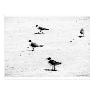 """Birds on South African Beach"" JTG Art Postcard"