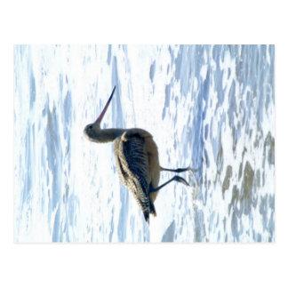 Birds on Stinson Beach Image #1 Postcard